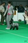 XVII. Mezinárodní výstava psů PRAHA 2009 č.79