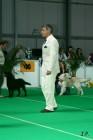 XVII. Mezinárodní výstava psů PRAHA 2009 č.80