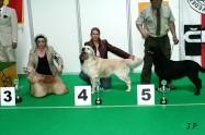 XVII. Mezinárodní výstava psů PRAHA 2009 č.81