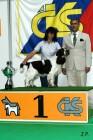 XVII. Mezinárodní výstava psů PRAHA 2009 č.82