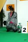XVII. Mezinárodní výstava psů PRAHA 2009 č.83
