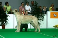 XVII. Mezinárodní výstava psů PRAHA 2009 č.85