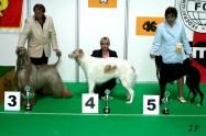 XVII. Mezinárodní výstava psů PRAHA 2009 č.86