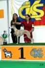 XVII. Mezinárodní výstava psů PRAHA 2009 č.87