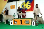 XVII. Mezinárodní výstava psů PRAHA 2009 č.89