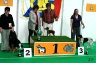 XVII. Mezinárodní výstava psů PRAHA 2009 č.90