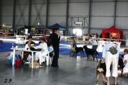 XVII. Mezinárodní výstava psů PRAHA 2009 č.94
