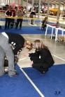 XVII. Mezinárodní výstava psů PRAHA 2009 č.96