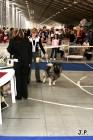 XVII. Mezinárodní výstava psů PRAHA 2009 č.105