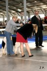 XVII. Mezinárodní výstava psů PRAHA 2009 č.107
