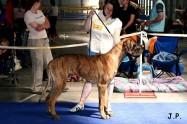XVII. Mezinárodní výstava psů PRAHA 2009 č.108