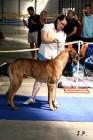XVII. Mezinárodní výstava psů PRAHA 2009 č.109