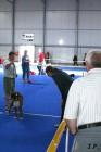 XVII. Mezinárodní výstava psů PRAHA 2009 č.114