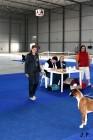 XVII. Mezinárodní výstava psů PRAHA 2009 č.115