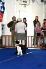 XVII. Mezinárodní výstava psů PRAHA 2009 č.119