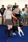 XVII. Mezinárodní výstava psů PRAHA 2009 č.120