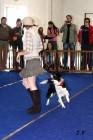 XVII. Mezinárodní výstava psů PRAHA 2009 č.124