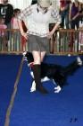 XVII. Mezinárodní výstava psů PRAHA 2009 č.127