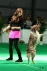 XVII. Mezinárodní výstava psů PRAHA 2009 č.139