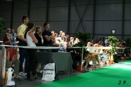 XVII. Mezinárodní výstava psů PRAHA 2009 č.140