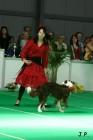 XVII. Mezinárodní výstava psů PRAHA 2009 č.141