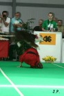 XVII. Mezinárodní výstava psů PRAHA 2009 č.142
