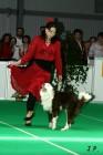 XVII. Mezinárodní výstava psů PRAHA 2009 č.144