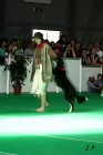 XVII. Mezinárodní výstava psů PRAHA 2009 č.146