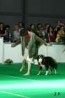 XVII. Mezinárodní výstava psů PRAHA 2009 č.147