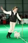 XVII. Mezinárodní výstava psů PRAHA 2009 č.149