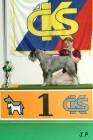 XVII. Mezinárodní výstava psů PRAHA 2009 č.159