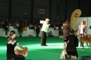 XVII. Mezinárodní výstava psů PRAHA 2009 č.161