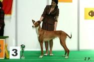 XVII. Mezinárodní výstava psů PRAHA 2009 č.162
