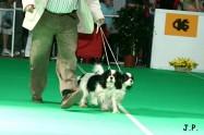 XVII. Mezinárodní výstava psů PRAHA 2009 č.165