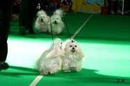 XVII. Mezinárodní výstava psů PRAHA 2009 č.166