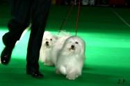XVII. Mezinárodní výstava psů PRAHA 2009 č.167