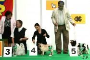 XVII. Mezinárodní výstava psů PRAHA 2009 č.169