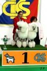 XVII. Mezinárodní výstava psů PRAHA 2009 č.170