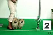 XVII. Mezinárodní výstava psů PRAHA 2009 č.171