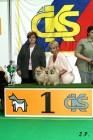 XVII. Mezinárodní výstava psů PRAHA 2009 č.172