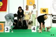 XVII. Mezinárodní výstava psů PRAHA 2009 č.173