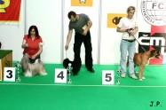 XVII. Mezinárodní výstava psů PRAHA 2009 č.174