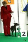 XVII. Mezinárodní výstava psů PRAHA 2009 č.176