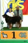 XVII. Mezinárodní výstava psů PRAHA 2009 č.178