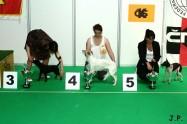 XVII. Mezinárodní výstava psů PRAHA 2009 č.180