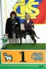 XVII. Mezinárodní výstava psů PRAHA 2009 č.181