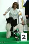 XVII. Mezinárodní výstava psů PRAHA 2009 č.182