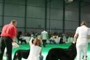 XVII. Mezinárodní výstava psů PRAHA 2009 č.184