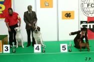 XVII. Mezinárodní výstava psů PRAHA 2009 č.185
