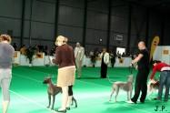 XVII. Mezinárodní výstava psů PRAHA 2009 č.187